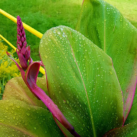 Pink and green by Hayley Moortele - Nature Up Close Leaves & Grasses ( #pink, #green, #leaves, #waterdrops )