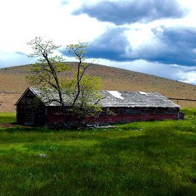 Old barn by Sherry Gardner - Buildings & Architecture Decaying & Abandoned