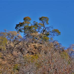 shepards tree lodge 003.JPG