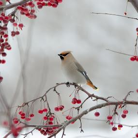 by Beaver Tripp - Animals Birds