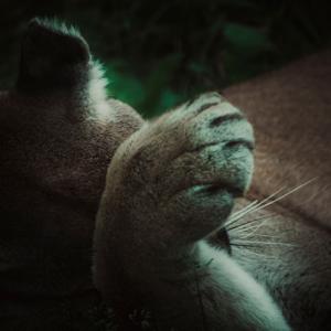 Cat-Nap-Mountain-Style.jpg