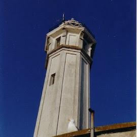 by Amanda Nolan - Buildings & Architecture Public & Historical ( #gull, #alcatraz, #prison, #touristattraction, #sanfrancisco, #usa, #tower )