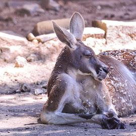 by Antonio Winston - Animals Other Mammals
