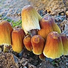 Mushroom's Family IV by Mārīte Ramša - Nature Up Close Mushrooms & Fungi