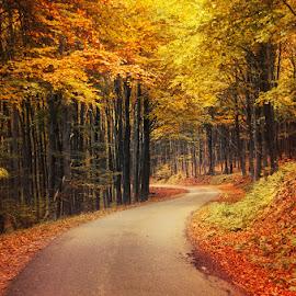Autumn Journey XXVI. by Zsolt Zsigmond - Landscapes Forests ( autumn, colors, fall, trees, forest, road )