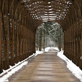 Bridge by Bojan K - Buildings & Architecture Bridges & Suspended Structures ( winter, railway )