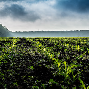 Morning fog over the newborn corn field. by Roger Hamblok - Landscapes Prairies, Meadows & Fields ( plant, haze, maize, green, clearing, ground, line, brume, space, young, woods, panorama, corn, smoke, field, open, sown, forrest, indian corn, fog, trees, lines, mealies, mist,  )