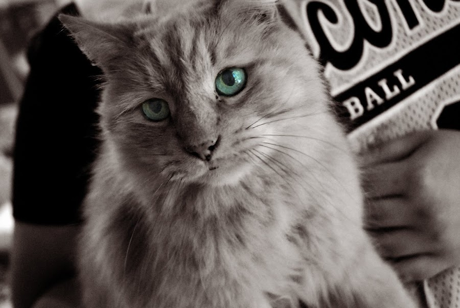 by Rebekah Miller - Animals - Cats Portraits