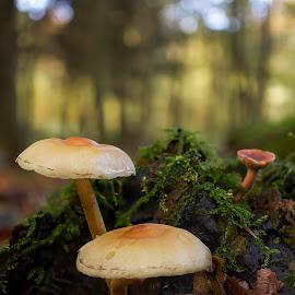 Pilze by Helmut Gloor - Nature Up Close Mushrooms & Fungi ( mushroom, focus stacking, wald, pilze, schafisheim, pilz, switzerland, schweiz, forest, olympus, mushrooms )
