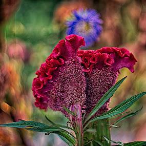 In my garden  by Dragan Nikolić - Flowers Flower Gardens (  )