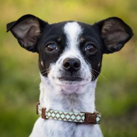 by Myra Brizendine Wilson - Animals - Dogs Portraits ( canine, pet, pets, dog, animal,  )