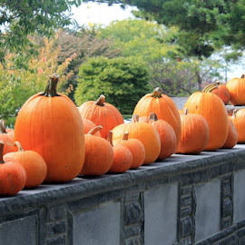 Pumpkins in the fall by Heidi George - Novices Only Flowers & Plants