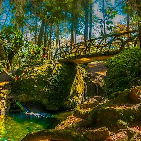 Um pequeno paraíso em Braga by Tempo Cativo Paulo Borges - City,  Street & Park  City Parks ( jardim, ponte de pedra, braga, bom jesus de braga, garden, paraiso )