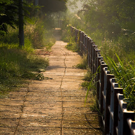 My morning walk by Van Kiet Nguyen - City,  Street & Park  City Parks ( promenade, green, trees, walk, morning sun light )