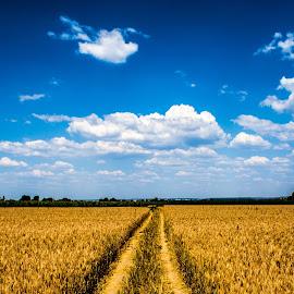 by Nuno Firmino - Landscapes Cloud Formations ( clouds, field, sky, blue, landscape, fields )