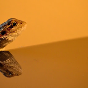 Reflecting on life by Jimmy Tuazon - Animals Reptiles ( bearded dragon )