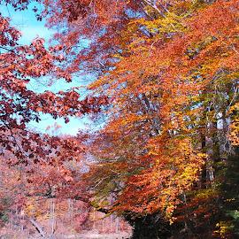 by Rosemary Isabella - Nature Up Close Trees & Bushes
