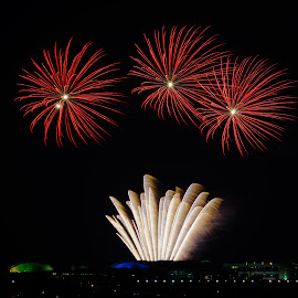 Red Flowers by Vinod Kalathil - Abstract Fire & Fireworks ( abstract, navy pier, fireworks, night, chicago )