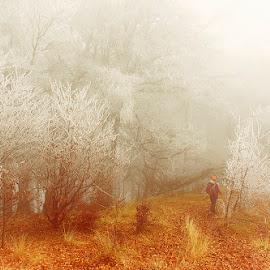 November by Costin Mugurel - Landscapes Forests ( nature, autumn, forest, frozen, landscape )