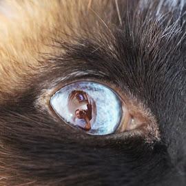 A kind of selfie by Cătălin Ivaşcu - Animals - Cats Portraits