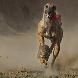 Run for life by Abdul Rehman - Animals - Dogs Running