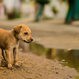 Puppy by Naveen Joyous - Animals - Dogs Puppies ( pet, puppy, puppy portrait, portrait, animal )