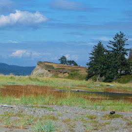 Rocky Point by Christine McEwan - Landscapes Beaches ( beaches, washington, blue sky, wetlands, whidbey island, oak harbor, blue skies, trees, rocky point, island county, beach )