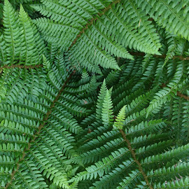 Fernbabies by Gene Richardson - Nature Up Close Other plants