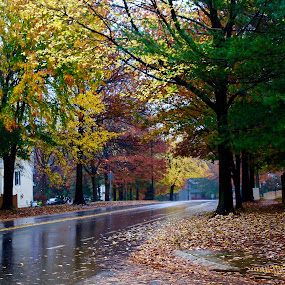 On a rainy day. by Peter DiMarco - City,  Street & Park  Vistas ( neighborhoods, neighborhood, leaves, rain, city )