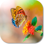 Download HD Butterfly Live Theme APK to PC