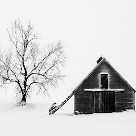 A Tree and a Barn  by Ken Smith - Black & White Landscapes ( barn, snow, landscape, nebraska )
