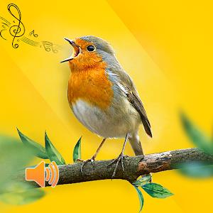 New Birds Ringtones 2020 - Bird sound mp3 For PC / Windows 7/8/10 / Mac – Free Download