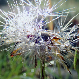 Crystal  by Ann Mcmillian - Novices Only Macro