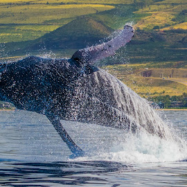 by Keith Sutherland - Animals Sea Creatures