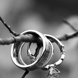 The Rings by Marisa Walker - Wedding Details ( wedding, branch, rings, bride, groom )