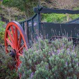 Dog Cart in the flowers by Rob Mousley - Landscapes Prairies, Meadows & Fields ( commonage, noordhoek, south africa, cart, flowers, cape town )