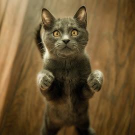 Cat by Marko Blažević - Animals - Cats Portraits ( home, cat, animals, cute cat, cute, close up, eyes, close, love, cats, pet, pets, closeup, eye, animal,  )