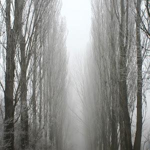 nebbia 019.JPG