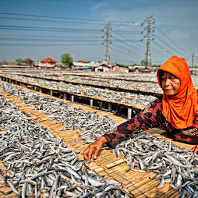 by Mario Wibowo - News & Events World Events ( orange, fish, colors, jakarta, portrait, fotorio, angke, d3, mario wibowo, indonesia, perspective, lines, nikon )