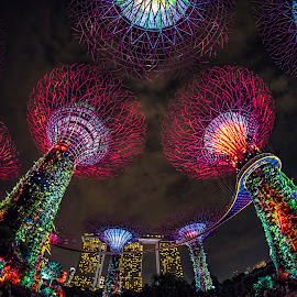 by Gordon Koh - City,  Street & Park  City Parks ( icon, tourist spot, garden by the bay, supertrees, colors, cityscape )