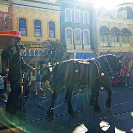 Horse Pulling Cart by Kristine Nicholas - Novices Only Pets ( center, light rays, equine, horses, sunshine, town, people, rays, sun )