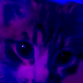Five Nights at Barsik's APK for Ubuntu