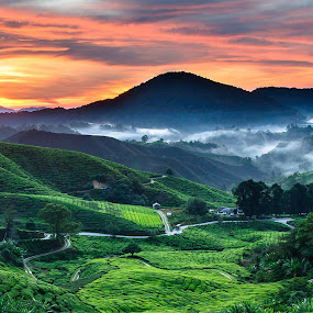 Sunrise at the Cameron Highland I by Pierre Husson - Landscapes Sunsets & Sunrises ( cameron highland, malaysia, sunrise, boh tea, landscape, tea plantation )
