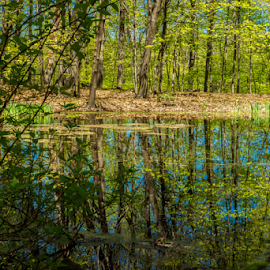 Spring In The Pond by Tina Hailey - Nature Up Close Water ( tina's captured moments, trees, reflections, pond )