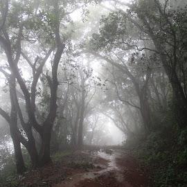 by Dr. Sagar Mayekar - Landscapes Forests