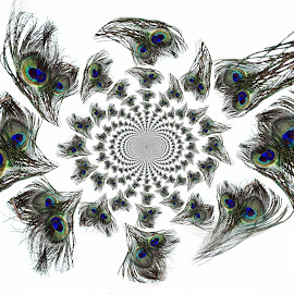 Peacock Kaleidoscope by Carole Pallier Cazzazsnapz - Abstract Patterns ( decor, abstract, bird, patterns, blue, green, art, white, feather, peacock )