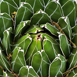 by Loreen Parkerson - Nature Up Close Other plants