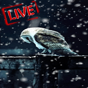 Download Snow Live Wallpaper HD For PC Windows and Mac