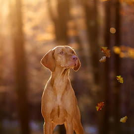 by Rado Ratic - Animals - Dogs Portraits