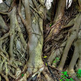 Alot by Doornkop Photos Hein van Niekerk - Nature Up Close Trees & Bushes
